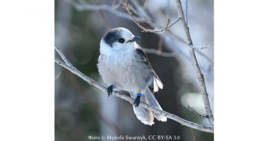 Вікіпедист Микола Сварник про еволюцію свого захоплення птахами
